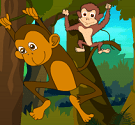 Truy tìm khỉ con