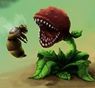 Cây diệt bọ