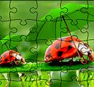 Ghép hình côn trùng